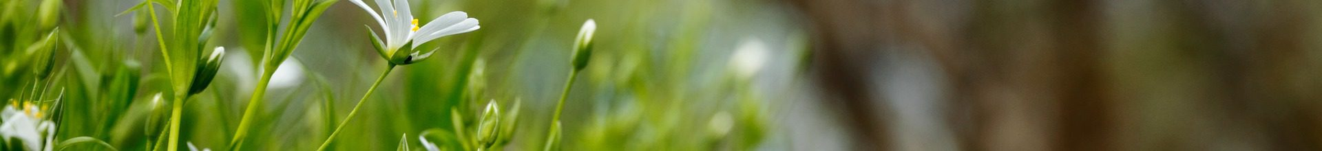scarificateur pelouse